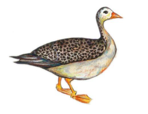 Gans - Goose