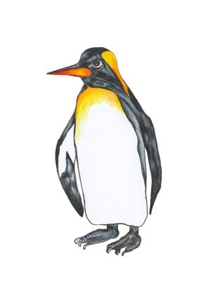 Pinguin - Penguin