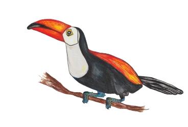 Tukan - Toucan