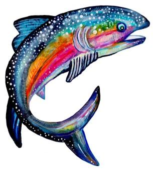 Regenbogenforelle - Rainbow Trout