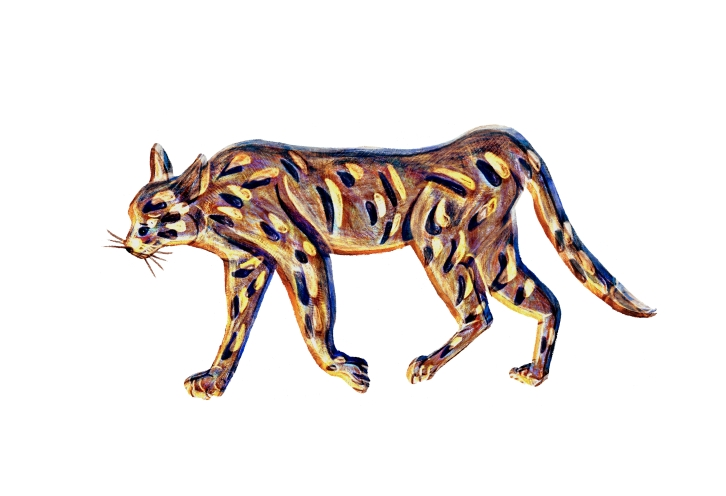 Wildkatze - Wildcat
