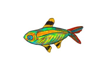 X-Ray Tetra - X-Ray Fish